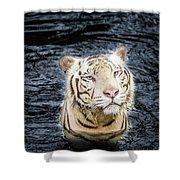 White Tiger 20 Shower Curtain