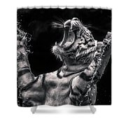 White Tiger Featured In Greece Exhibition Shower Curtain