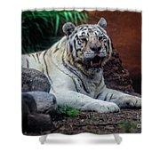 White Tiger Gladys Porter Zoo Texas Shower Curtain