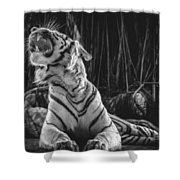 White Tiger. Growl. Shower Curtain