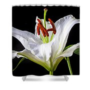 White Tiger Lily Still Life Shower Curtain by Garry Gay