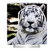 White Tiger Shower Curtain