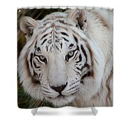 White Tiger Portrait Shower Curtain