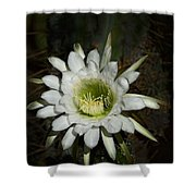 White Torch Cactus  Shower Curtain