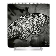 White Tree Nymph - 6 Shower Curtain