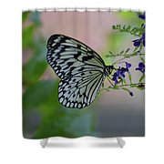 White Tree Nymph Polinating Purple Flowers Shower Curtain