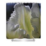 White Tulip 2 Shower Curtain