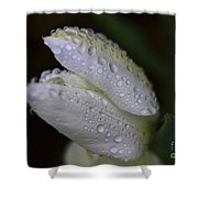 White Tulip Macro Shower Curtain