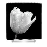 White Tulip Open Shower Curtain