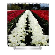 White Tulip Rows Shower Curtain