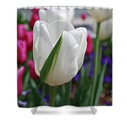White Tulip With A Green Stripe In A Garden Shower Curtain