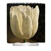 White Tulip With Texture Shower Curtain