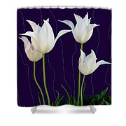 White Tulips For A New Age Shower Curtain