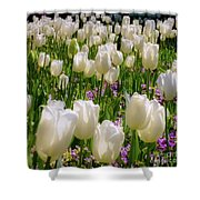 White Tulips In Bloom Shower Curtain