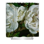 White Twin Flowers Shower Curtain