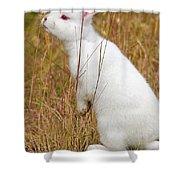 White Wabbit Shower Curtain
