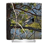 White Wagtail 2 Shower Curtain