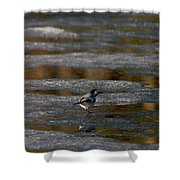 White Wagtail 4 Shower Curtain