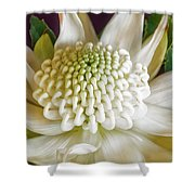 White Waratah Shower Curtain