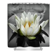 White Water Lily Black And White Shower Curtain
