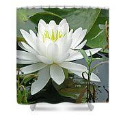 White Water Lily Wildflower - Nymphaeaceae Shower Curtain