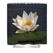 White Waterlily 1 Shower Curtain