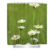 White Wild Flowers Nature Spring Scene Shower Curtain