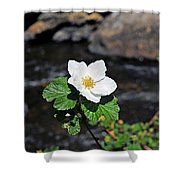 White Wild Rose In Big Thompson Canyon Shower Curtain