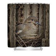White-winged Dove - Nesting Shower Curtain