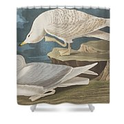 White-winged Silvery Gull Shower Curtain