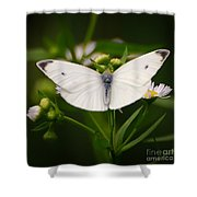 White Wings Of Wonder Shower Curtain