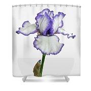 White With Purple Trim Bearded Iris  Shower Curtain