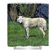 White Wolf 2 Shower Curtain