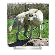 White Wolf 3 Shower Curtain