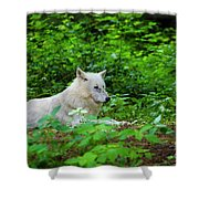 White Wolfe Shower Curtain