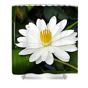 White Wonder Shower Curtain