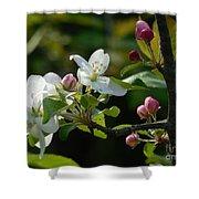 White Woodland Crabapple Flowers Shower Curtain