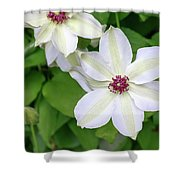White, Yellow, And Purple Clematis Blossom Shower Curtain
