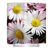 White Yellow Daisy Flowers Art Prints Pink Blossoms Shower Curtain