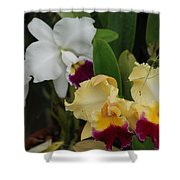 White Yellow Orchids Shower Curtain
