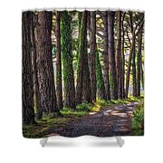 Whiteford Burrows Woods Shower Curtain
