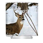Whitetail Buck Profile Shower Curtain
