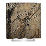 Whitetail Buck Square Shower Curtain