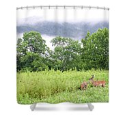 Whitetail Deer 1 Shower Curtain