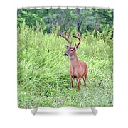 Whitetail Deer 4 Shower Curtain