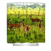 Whitetail Deer Family Shower Curtain