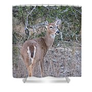 Whitetail Deer II Shower Curtain