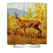 Whitetail Deer In Aspen Woods Shower Curtain by Crista Forest