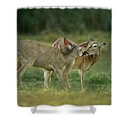 Whitetail Deer Share An Initmate Moment Texas Wildlife Shower Curtain