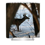 Whitetail Deer Threw The Trees Shower Curtain